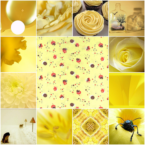 yellowflickr.jpg