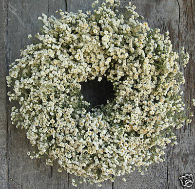 feverview wreath from amgrowers - Decorative Wreaths