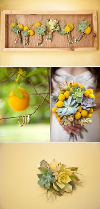 orange-succulents
