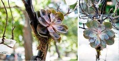 succulents_05