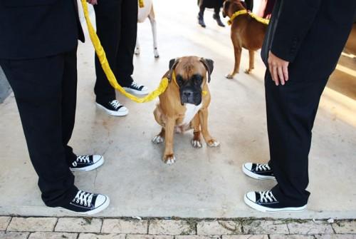 homemade-diy-ribbon-dog-leash-wedding