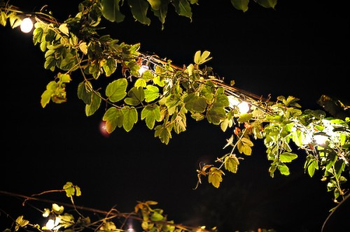 lights-in-garden-wedding