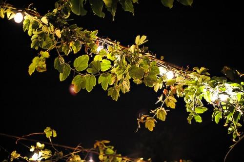 lights-in-garden-wedding