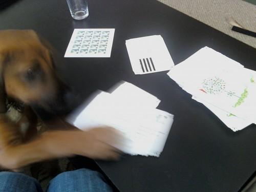 puppy-wedding-planner