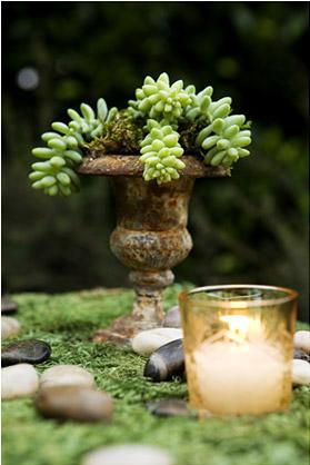rustic-succulent