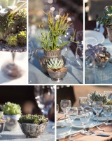 silver-succulents1