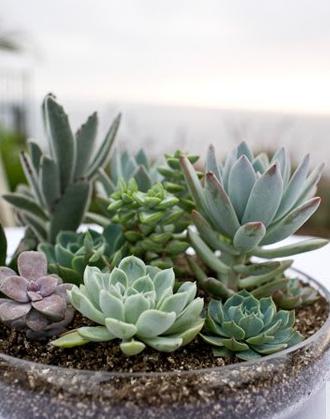 succulent-centerpieces2