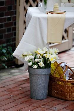 Daffodils in Galvanized Pail