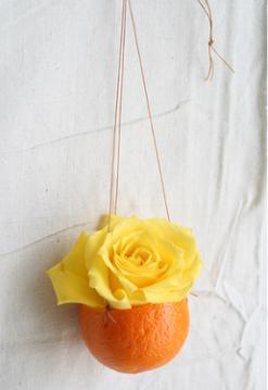 yellow-rose-in-orange