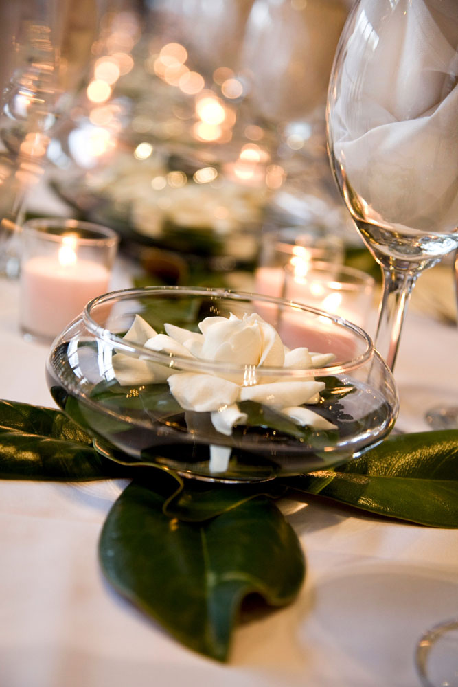 how to clean gardenia leaves