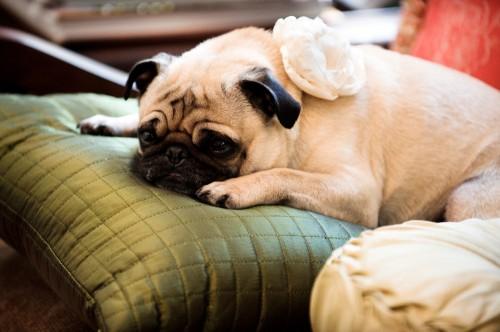 Puppy Flower Girl
