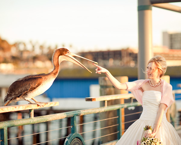 Bride-and-Seagull