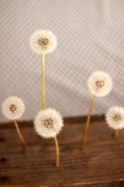 Floating Dandelion Centerpiece