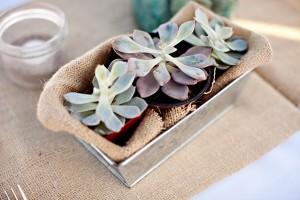 Succulent-Centerpiece