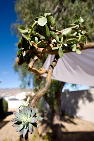 Succulent-and-Branch-Ceremony-Arch