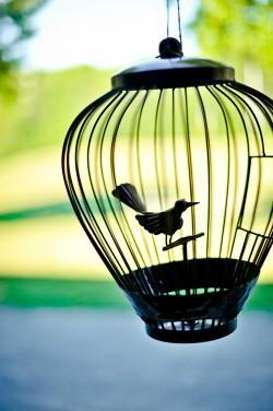 Black-Bird-Cage