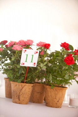 pink and red coir pot centerpieces
