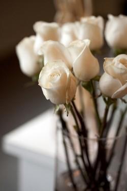 White-Long-Stemmed-Roses