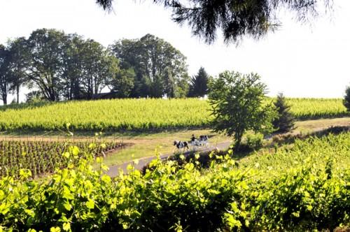 Wine-Country-Farm-Oregon-Wedding-Deyla-Huss-Photography-18
