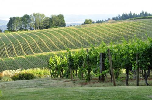 Wine-Country-Farm-Oregon-Wedding-Deyla-Huss-Photography-201