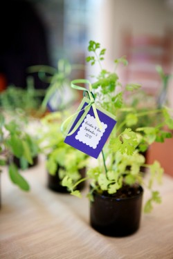 Potted-Herb-Centerpieces