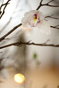Orchid-Branch-Wedding-Floral
