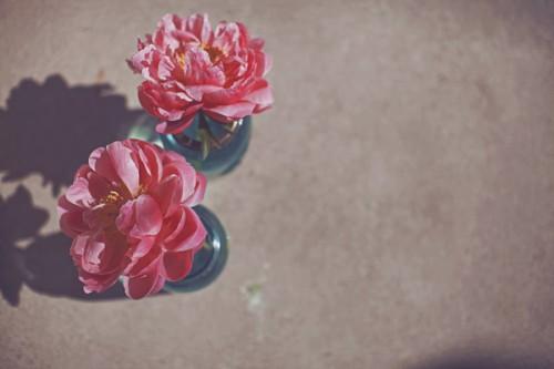 Pink-Flower-in-Blue-Bud-Vase