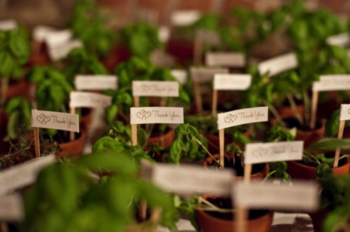 Potted-Plant-Wedding-Favors