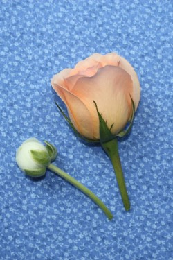 How-to-Make-a-Boutonniere-4