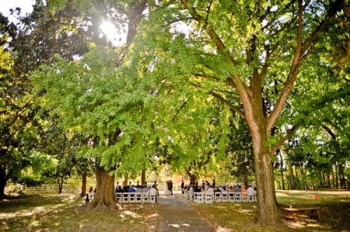 outdoor-ceremony-under-oak-trees