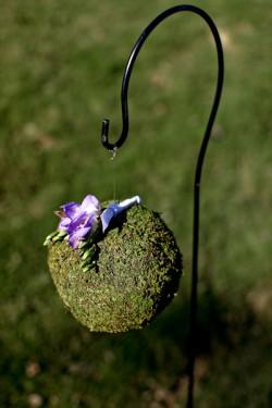 Moss-Pomander