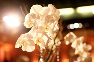 Orchid-Bloom