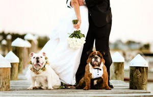 Bulldog Wedding Photos