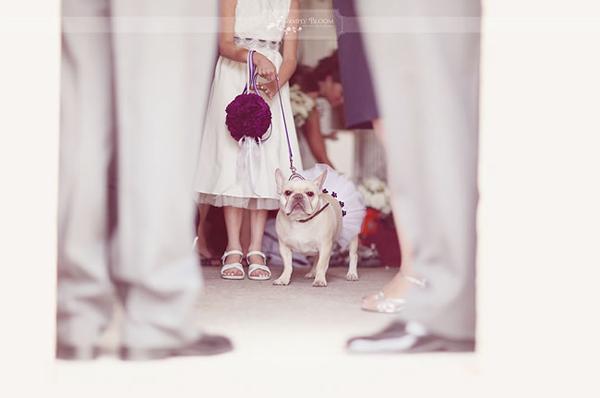 Bulldog-Flowergirl