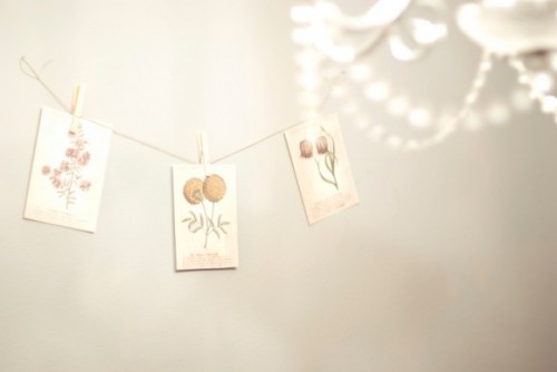 Seed-Packet-Garland