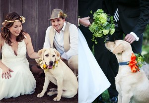 Wedding-Puppy-Flower-Collar-copy