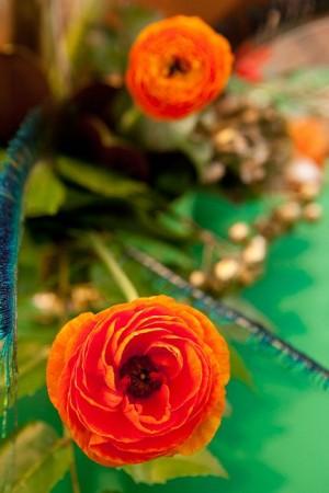 Orange-Ranunculus