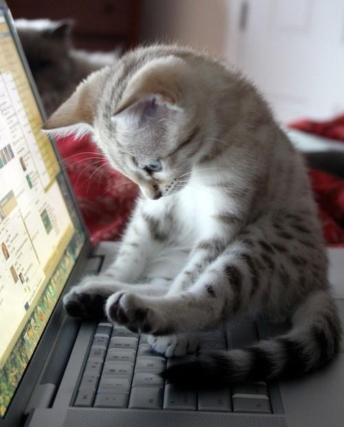 kitty-at-computer
