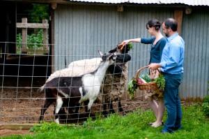 Farm-Engagement-Shoot-Claire-Barrett-Photography