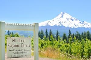 Mt-Hood-Organic-Wedding