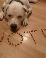 Puppy-Love-1