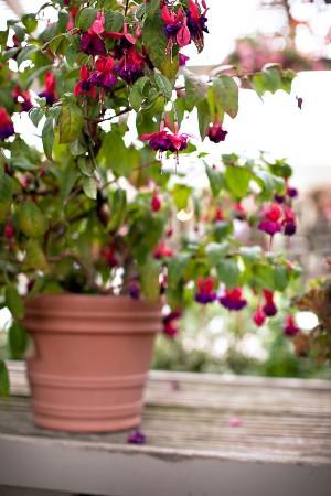 Elegant-California-Garden-Wedding-by-Ashleigh-Taylor-13