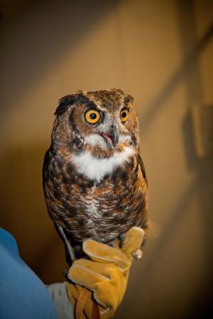 Wedding-Owl