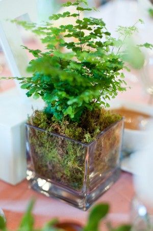 Maidenhair-Fern-Centerpiece
