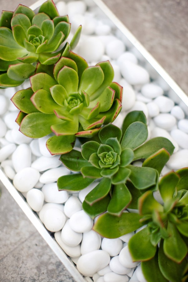 Succulent-Wedding-Decor