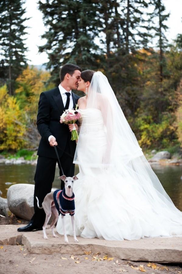 Italian-Greyhound-Wedding-Photo