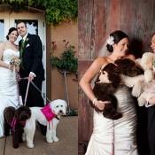 Lilia-Photography-Wedding-Photos-3