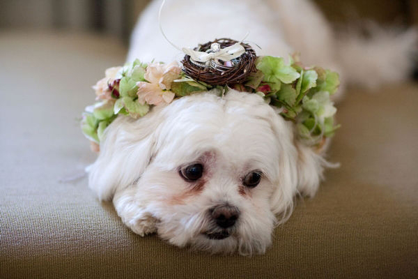 Four-Legged-Ring-Bearer