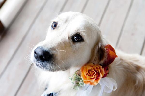 Puppy-Dog-Wedding-Eyes