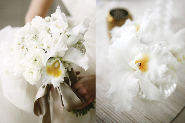 White-Cattleya-Orchids